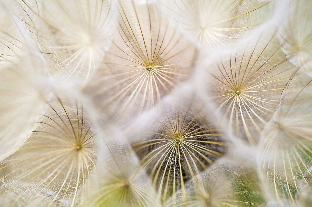 Die besten Hausmittel gegen Allergien