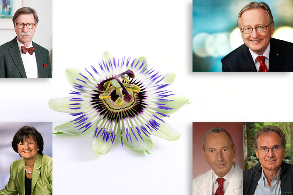 Passionsblume Dr. Böhm