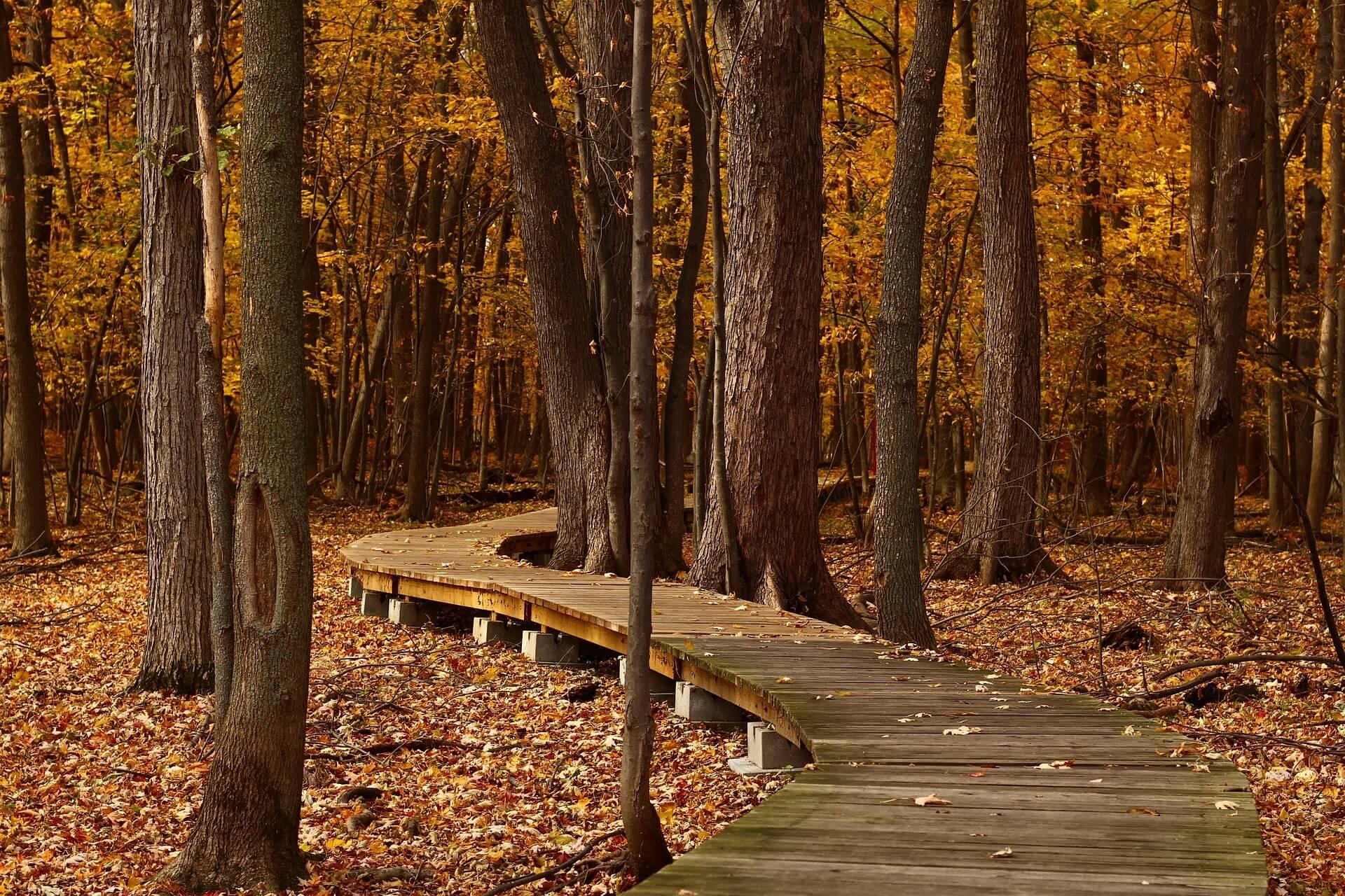 Spazieren im Herbst