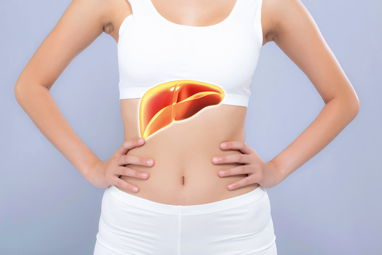 Gesunde Leber, gesunder Körper - Leber unterstützen