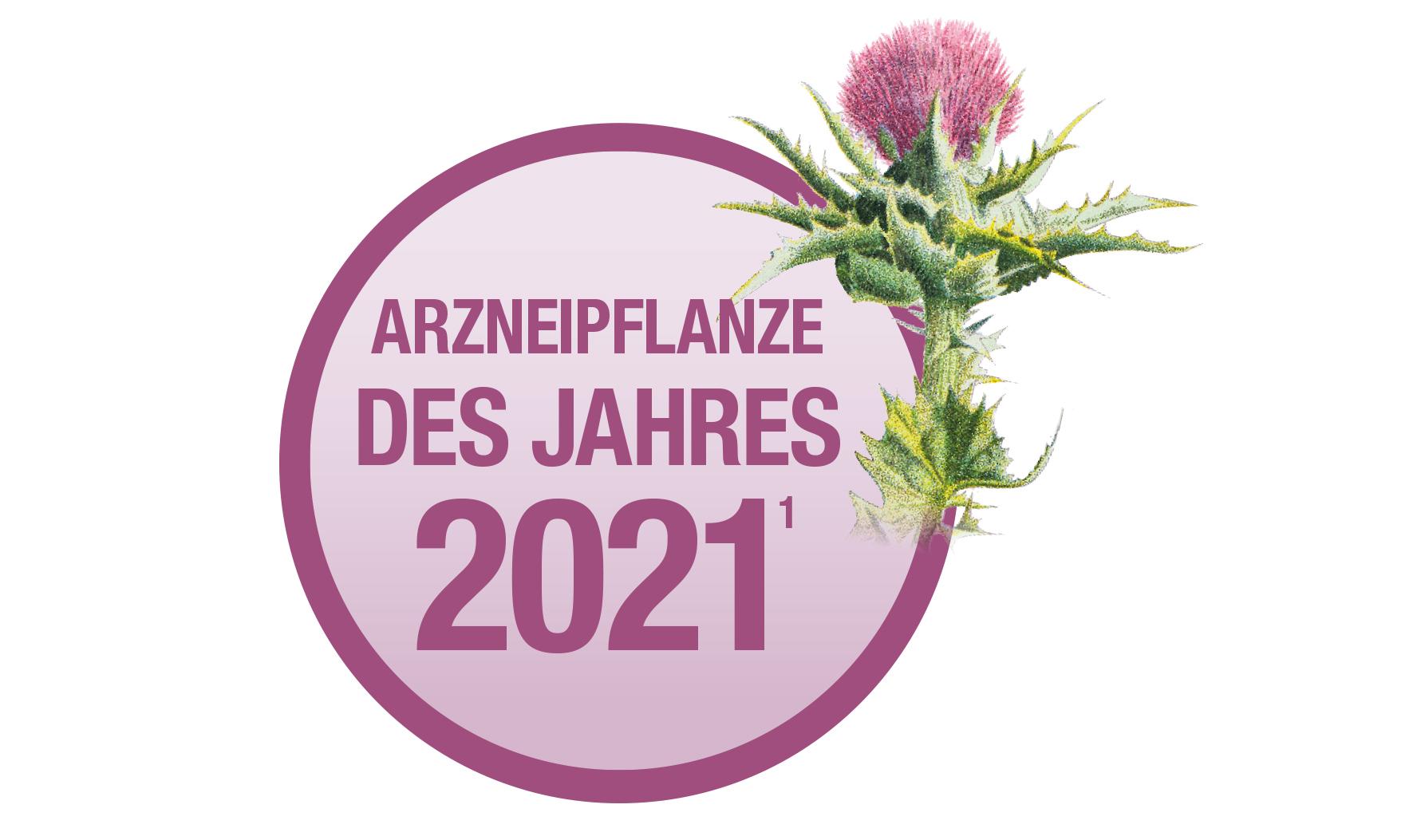Mariendistel - Arzneipflanze des Jahres 2021